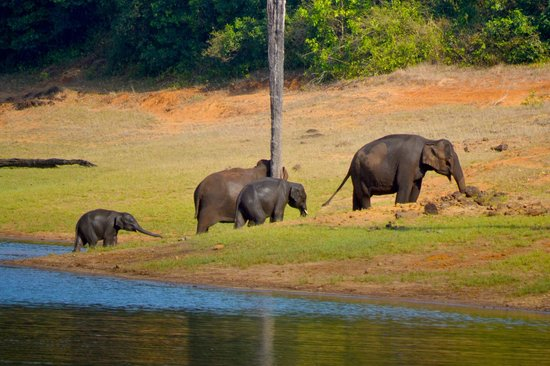 Hotel Treetop: Elephants