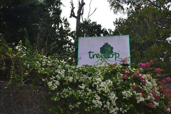 Hotel Treetop: Treetop