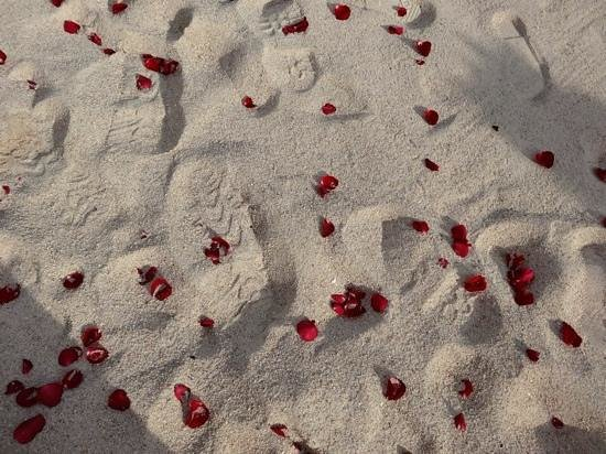 Beach Republic The Residences : rose pettles scattering the beach