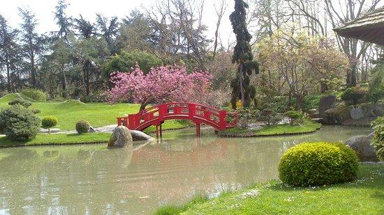 Jardin Japonais : le pont et son cerisier
