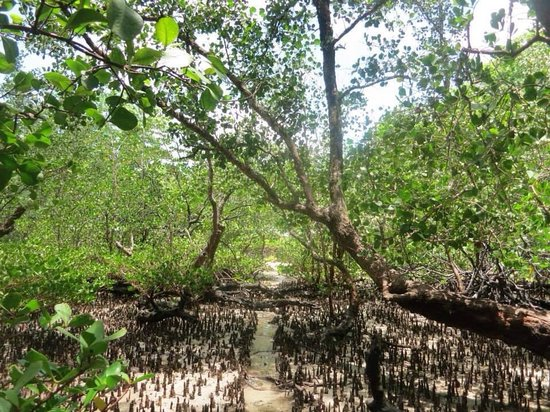 Two Fish Divers Bunaken: Mangroves in front of the resort