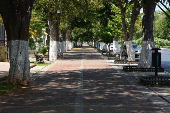 The leafy pavement of Paseo de Montejo