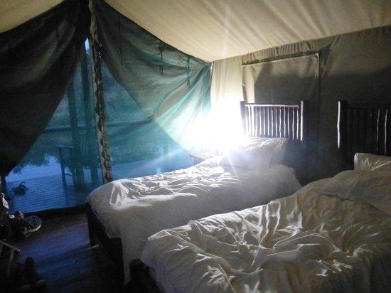 Machampane Wilderness Camp: tent