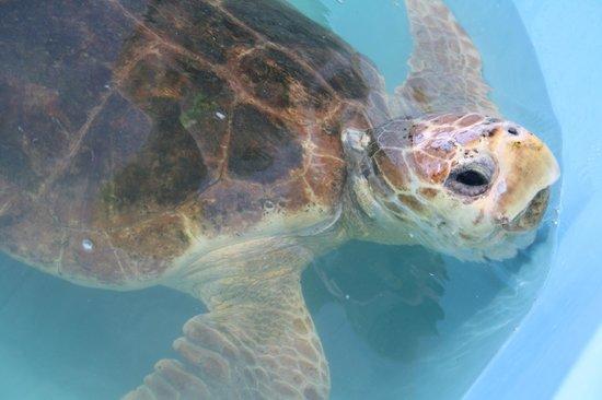The Turtle Hospital: Bebe tortue