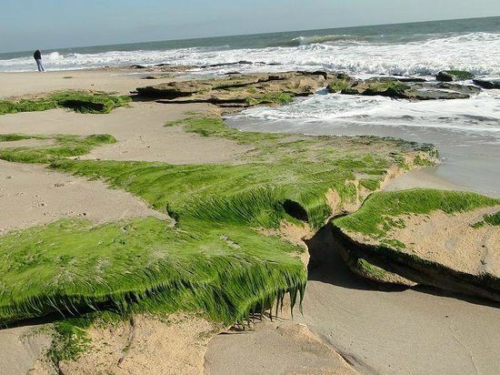 Fort Fisher State Historic Site : coquina rocky foundation