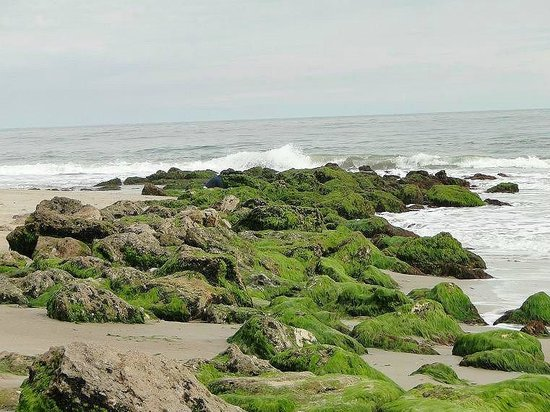 Fort Fisher State Historic Site: coquina rocky formation
