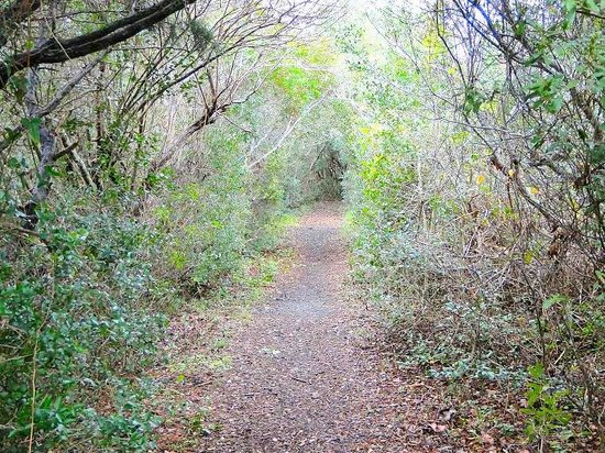 Fort Fisher State Historic Site: path through maritime forest
