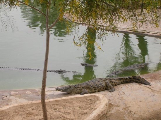 Krokodilfarm Animalia: FERME CROCO