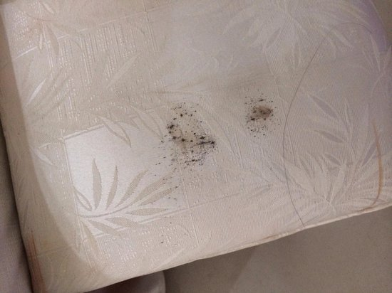Hotel Beach House Playa Dorada: Fungus on the bed.