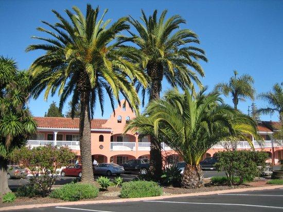 Best Western Plus El Rancho Inn : beautiful palm trees