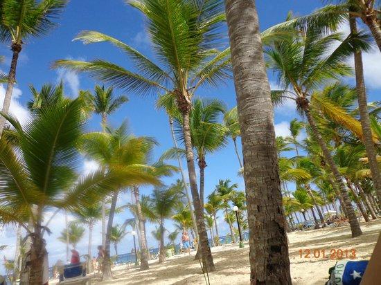ClubHotel Riu Bambu: vista desde el restaurante junto a la playa