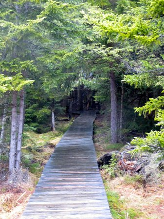 Canaan Valley Resort: Entering Deep Woods on One of the Trails