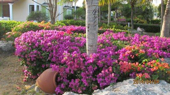 Melia Cayo Santa Maria: Belles fleurs partout