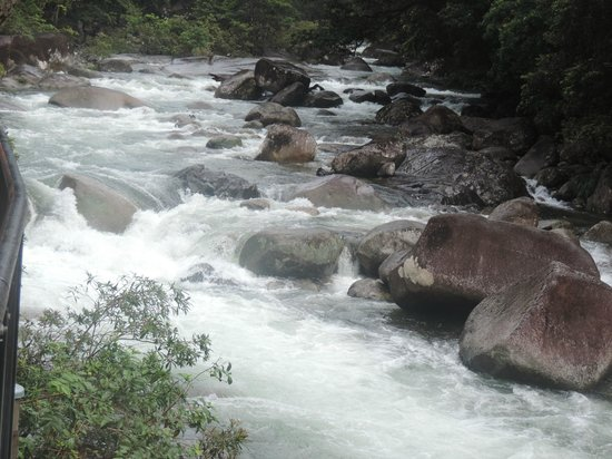 Daintree National Park : Stream at Mossman Gorge