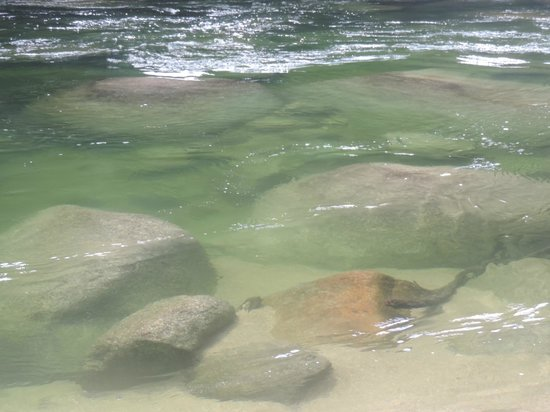 Daintree National Park : Crystal Clear waters