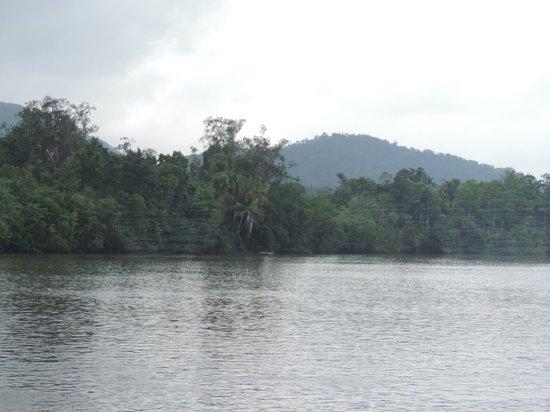 Daintree National Park: Daintree River