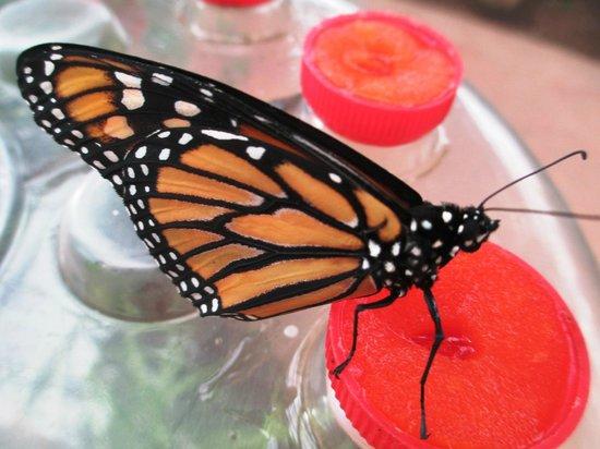 Butterfly Park of Benalmadena : Papillon fashion !