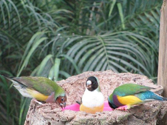 Butterfly Park of Benalmadena : Les oiseaux