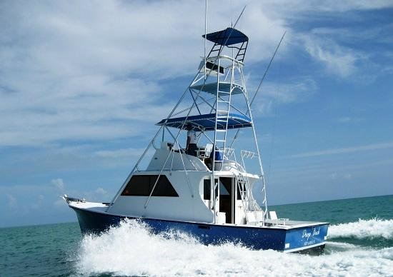 Drop Back Fishing Charters: Drop Back to the Fish
