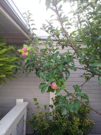 Peach Tree Inn : Fiquei com vontade pegar uma...