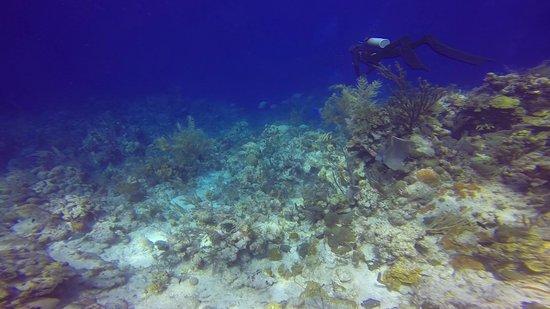 Oasis Divers: Grand Turk Dive #2 McDonald