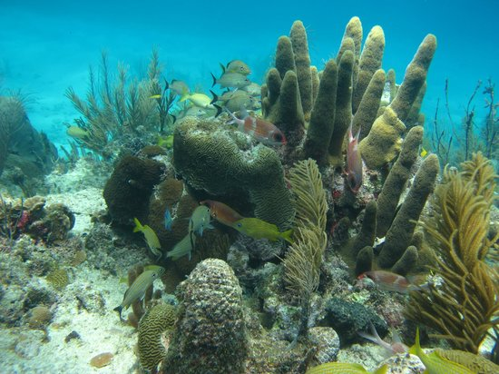 Cabanas El Encanto: mergulho em providencia