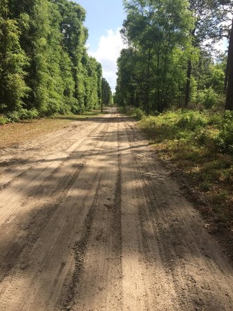 Suwannee River State Park: Dirt road back of the campground, good for dog walking