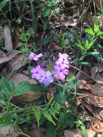 Suwannee River State Park: Flower on the trail