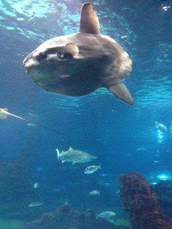 L'Aquarium de Barcelona: Bello!