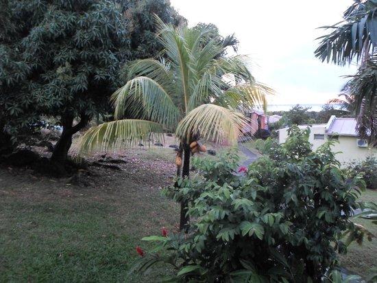Coeur Caraibes : vue de la terrasse, le terrain