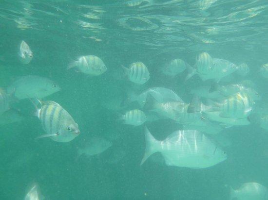 Barcelo Maya Colonial: fishies
