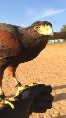 Banyan Tree Al Wadi : Falconry show up-close