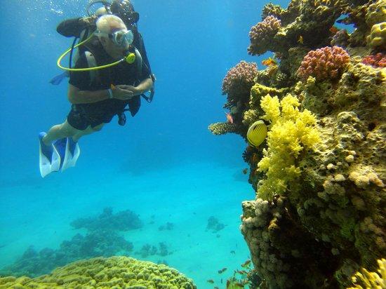 Jaz Mirabel Beach: aqua dive 4