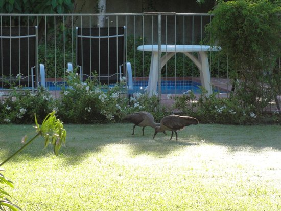 Fynbos Villa Guest House: Early morning garden guests and pool beyond