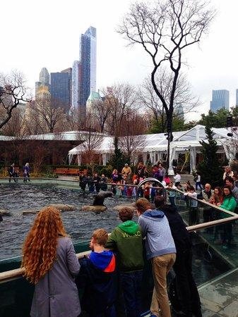 Central Park Zoo: Sea Lion Feeding
