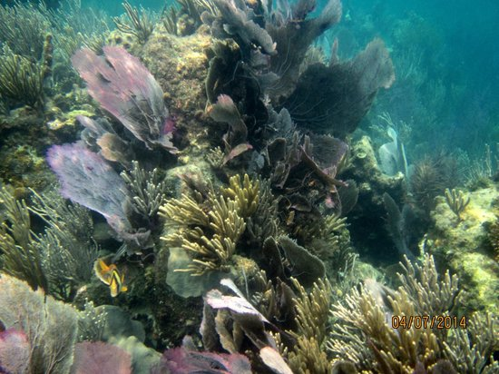 Pirate's Point Adventure Tours: snorkeling