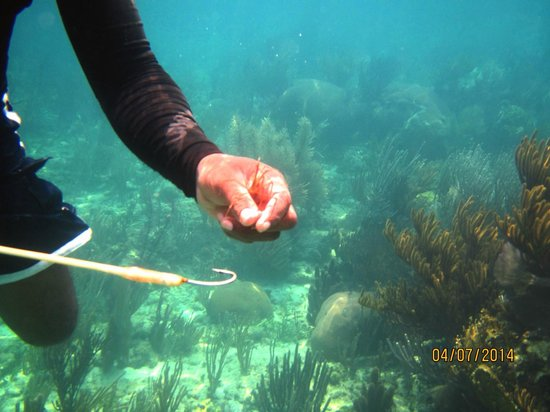 Pirate's Point Adventure Tours: arrow crab
