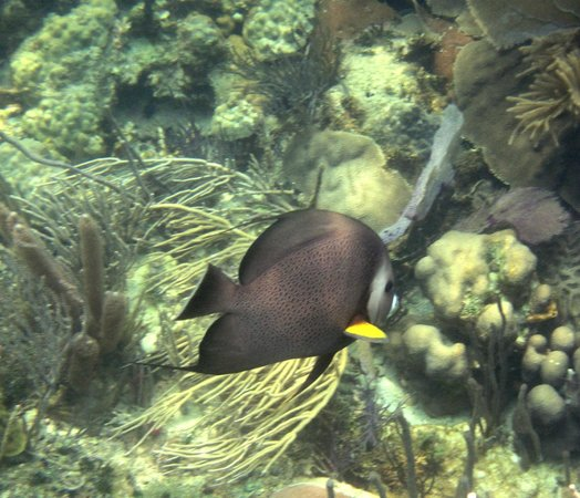 Pirate's Point Adventure Tours: angelfish