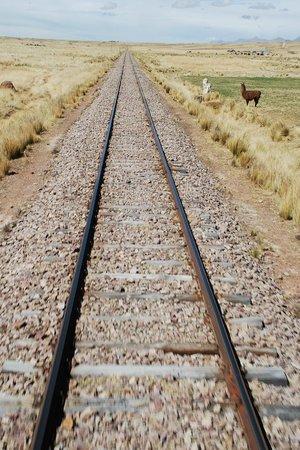 PeruRail Titicaca: Trackside Llamas