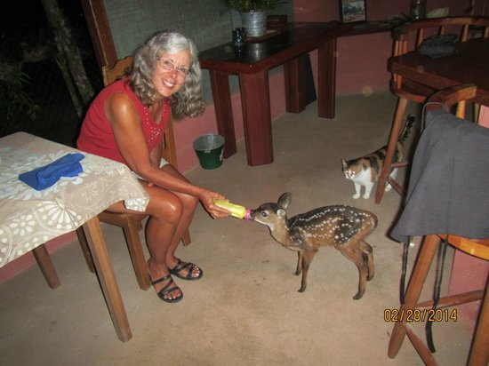 The Farm Inn: I am feeding Bambi