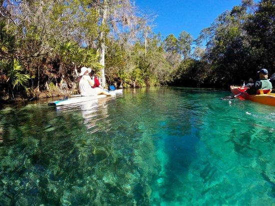 Doo's Amazing Tours : Weeki Wachee Paddleboard Tour