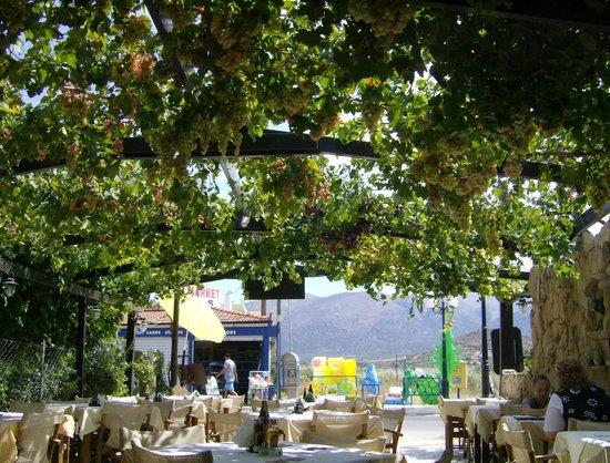 Phaedra Beach Hotel: Yannis' taverna near hotel