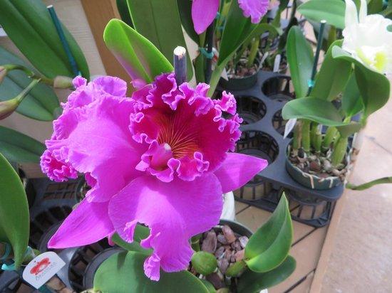 Akatsuka Orchid Gardens: Beautiful