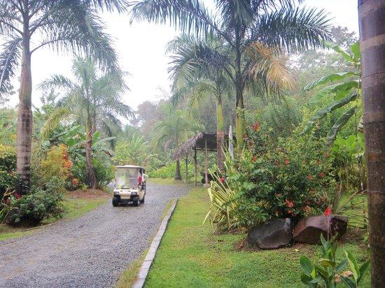 Parque Nacional Marino Isla Bastimentos: Entrada en la isla