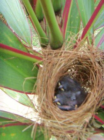Meeres-Nationalpark Insel Bastimentos (Parque Nacional Marino Isla Bastimentos): pichones en una planta