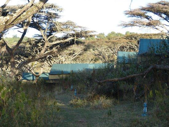 Ang'ata Camp Ngorongoro : Tents in acacia forest