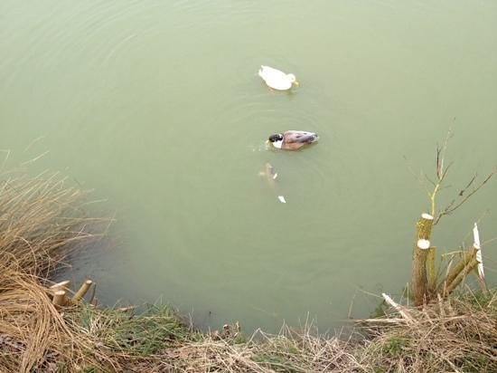 Yellowtop Country Park: feeding the ducks and the huge fish