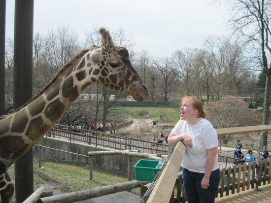 The Maryland Zoo: Giraffe Feeding