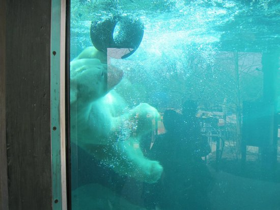 The Maryland Zoo : PB3