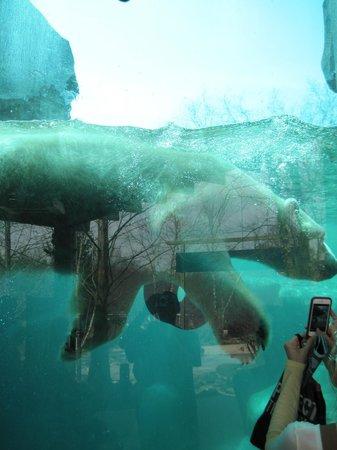 The Maryland Zoo : PB2
